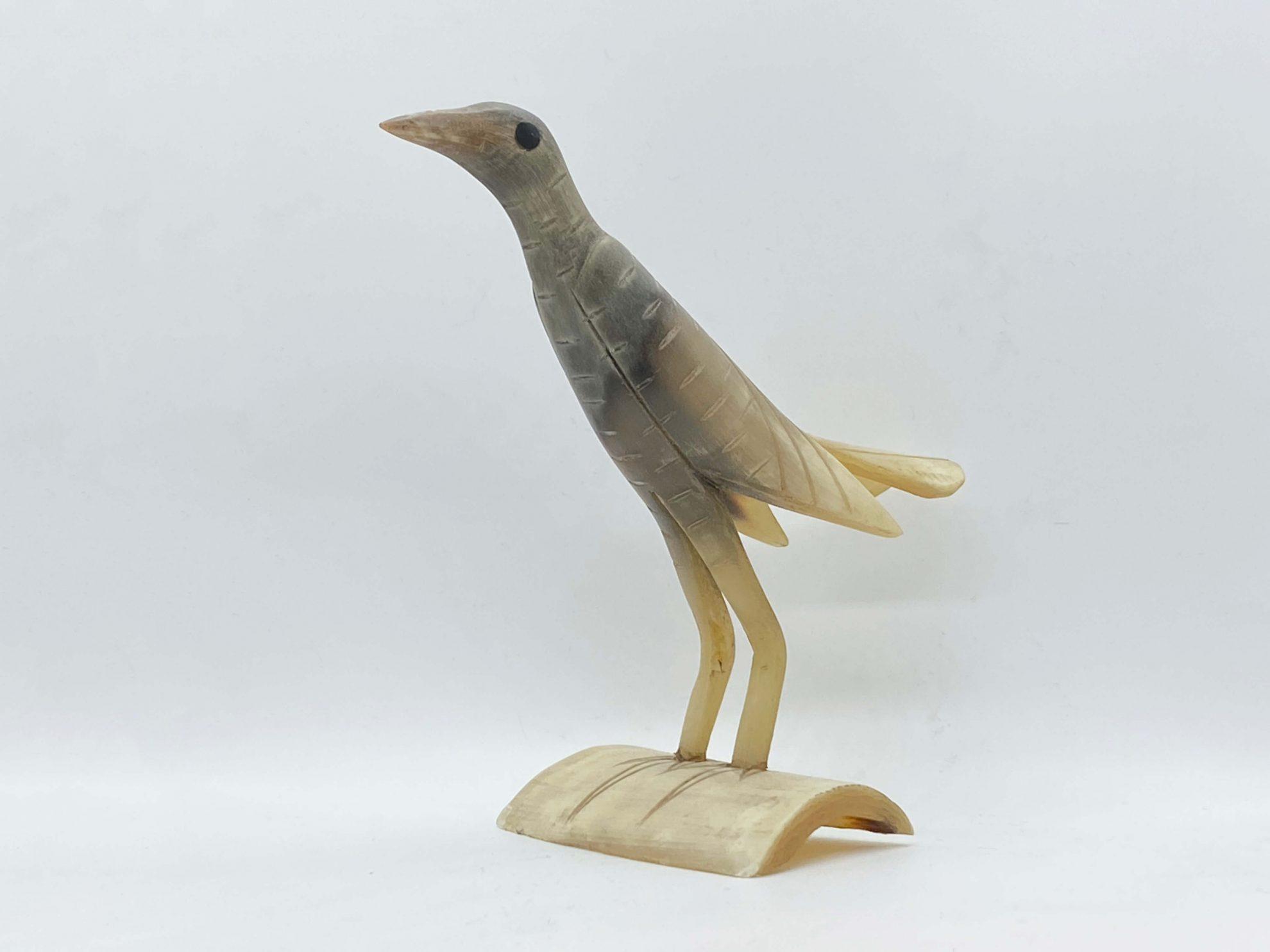 Vogel van hoorn - Haïti